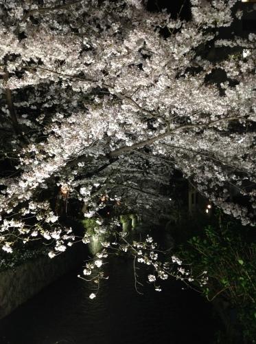 京都桜たより 2020_b0153663_14261802.jpeg