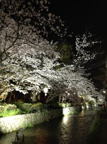 京都桜たより 2020_b0153663_14264944.jpeg