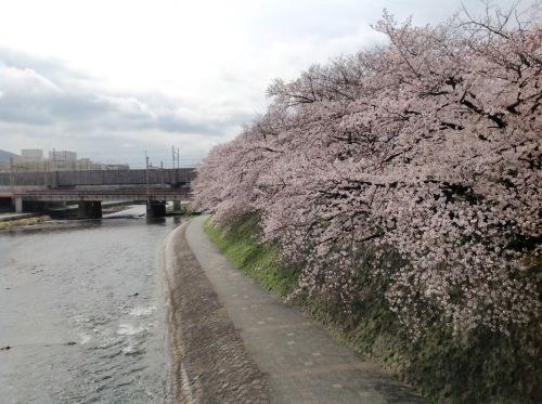 京都桜たより 2020_b0153663_14293850.jpeg