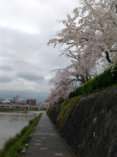 京都桜たより 2020_b0153663_14301636.jpeg