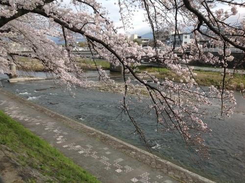京都桜たより 2020_b0153663_14304787.jpeg