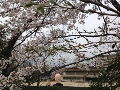 京都桜たより 2020_b0153663_14314427.jpeg
