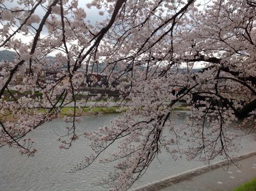 京都桜たより 2020_b0153663_14333052.jpeg