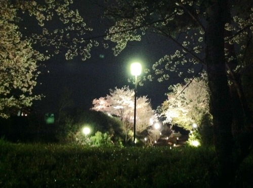 京都桜たより 2020_b0153663_14381595.jpeg