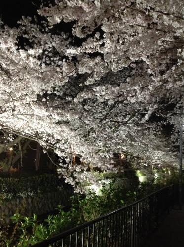 京都桜たより 2020_b0153663_14471003.jpeg