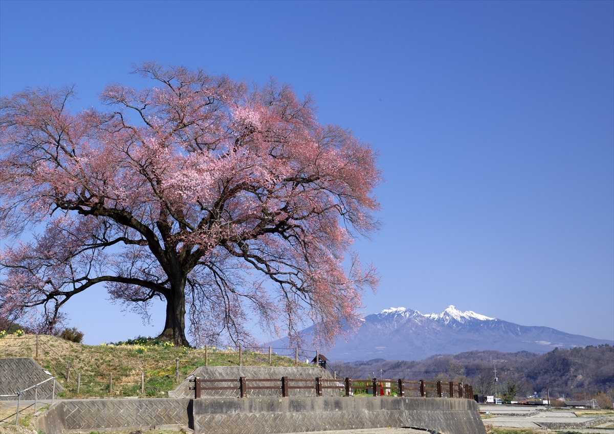 わに塚の桜 1_f0018464_14313161.jpg