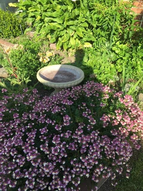 そろそろ雑草取りと庭の掃除_e0350971_13233976.jpg