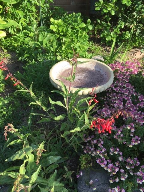そろそろ雑草取りと庭の掃除_e0350971_13365521.jpg