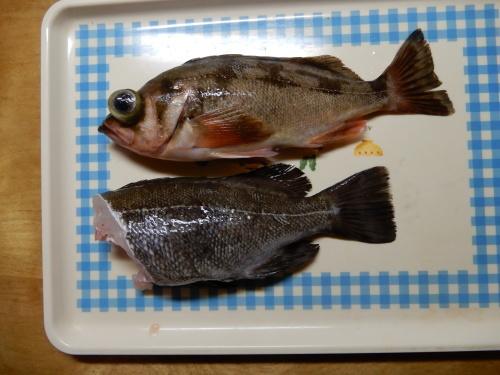 """""""春告魚""""_c0111172_21403155.jpg"""