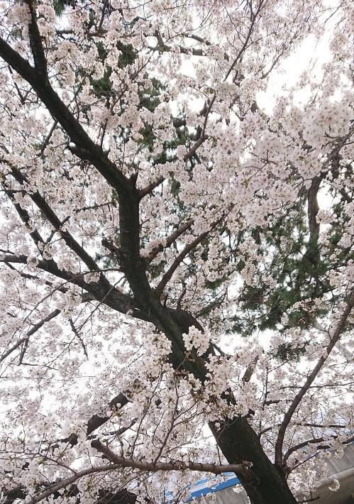 神戸から、自然の美と脅威_a0098174_21294277.jpg