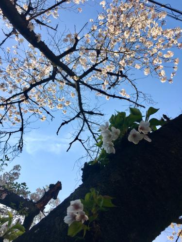 桜休み_e0025376_22341945.jpg