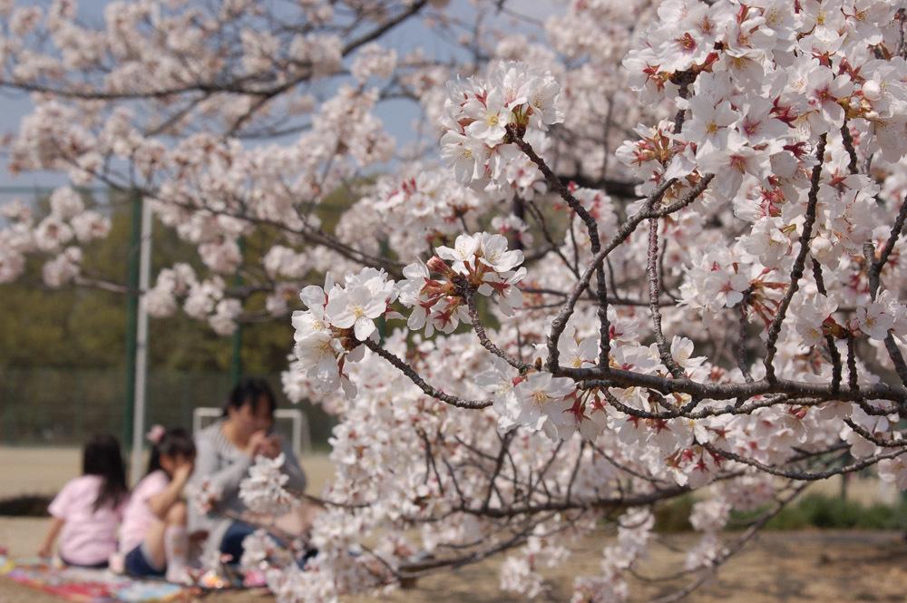今年のお花見は・・・_f0159784_16081399.jpg