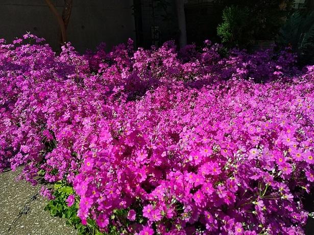 なんのお花?_b0117785_16313059.jpg