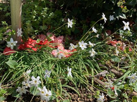 4月の庭 2020 _f0239100_21261855.jpg