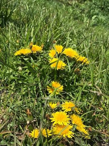 花、時々犬_f0242002_10140597.jpg