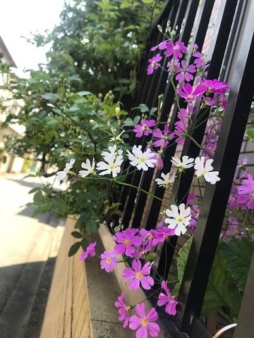 花、時々犬_f0242002_10142637.jpg