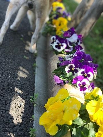 花、時々犬_f0242002_10152229.jpg