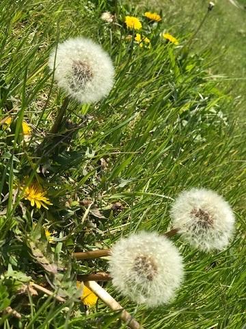 花、時々犬_f0242002_10161412.jpg