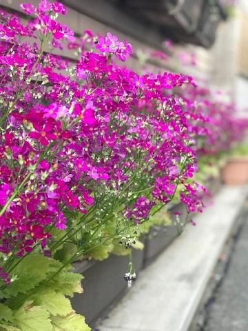 花、時々犬_f0242002_10165229.jpg