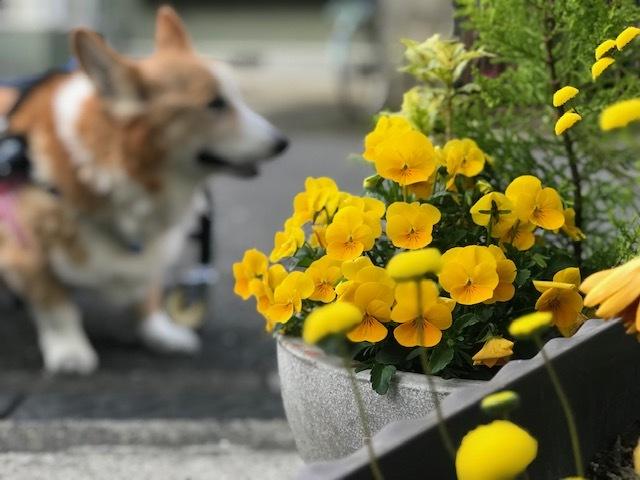 花、時々犬_f0242002_10183654.jpg