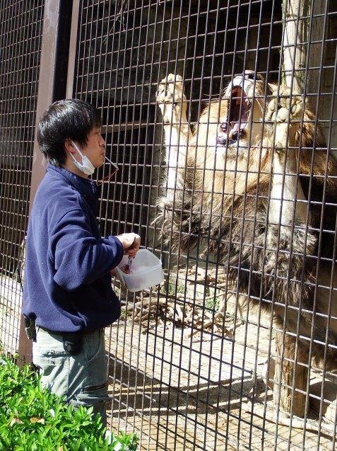 ライオンのおしっこトレーニング_c0290504_16045005.jpg