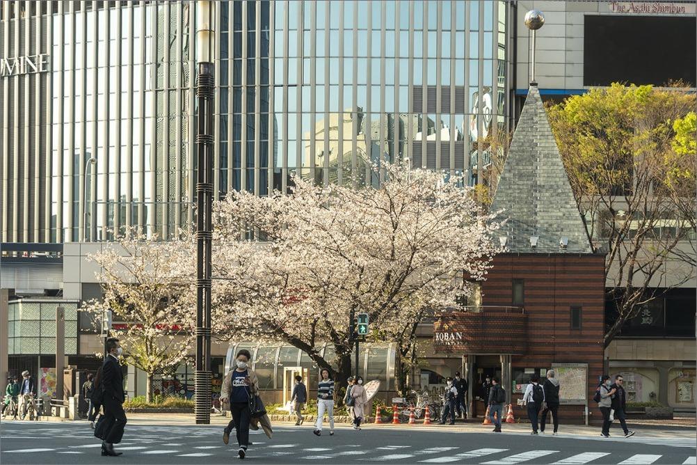 やっと春支度。 4月4日(土)   6872_b0069507_00584861.jpg