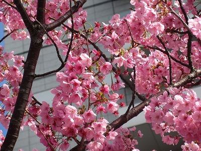 桜と苺のサンドイッチ♪_b0143308_20554515.jpg