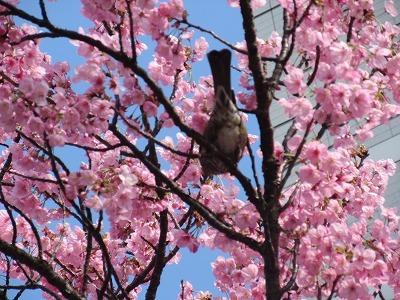 桜と苺のサンドイッチ♪_b0143308_20560053.jpg