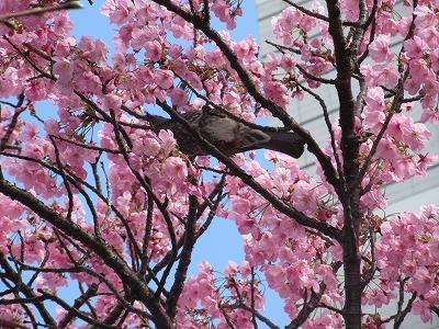 桜と苺のサンドイッチ♪_b0143308_20560867.jpg