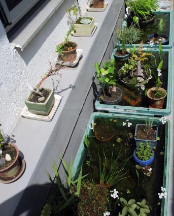 ベランダのビオトープにも、再びちっちゃな春がやって来ました。_e0120614_12170925.jpg