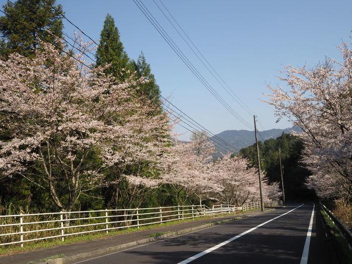 桜ケ峠の桜並木_c0116915_00253013.jpg
