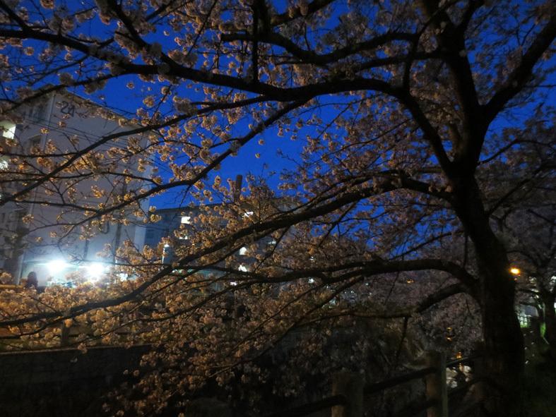 ■柄にもなく桜見物ウォーキング──週替わりの夕暮れ[4/2-5]_d0190217_21563596.jpg