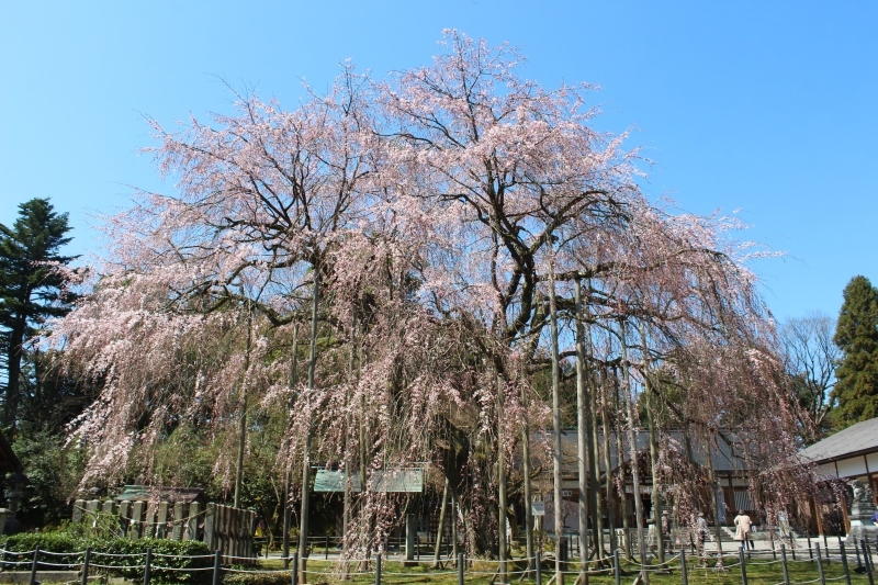 愛宕坂茶道美術館へ_b0220318_12545422.jpg