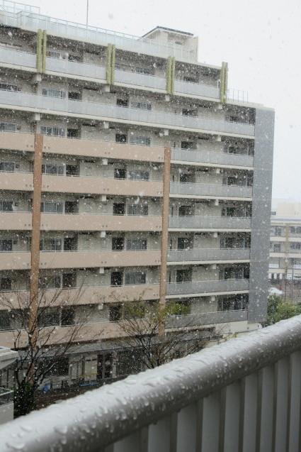 季節外れの雪_e0101819_23130146.jpg