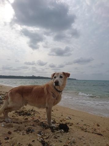 4月5日愛犬ティーダ15歳!!_c0070933_20534517.jpg