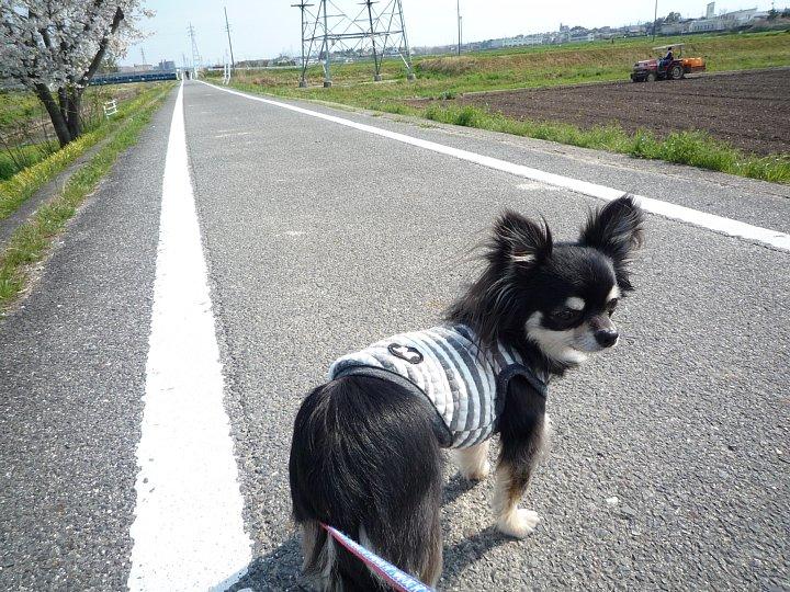 2020年4月11日 春のお散歩  !(^^)!_b0341140_18562686.jpg