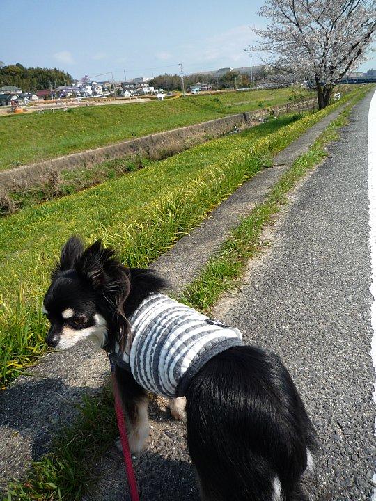 2020年4月11日 春のお散歩  !(^^)!_b0341140_18564689.jpg