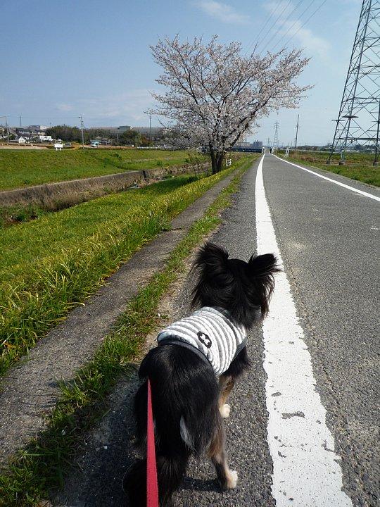 2020年4月11日 春のお散歩  !(^^)!_b0341140_18572125.jpg