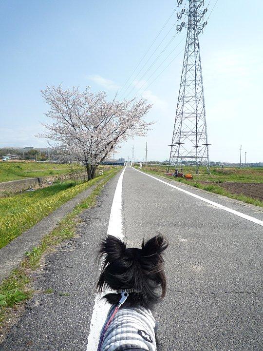 2020年4月11日 春のお散歩  !(^^)!_b0341140_18573525.jpg