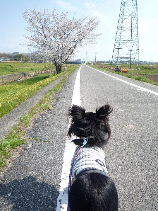 2020年4月11日 春のお散歩  !(^^)!_b0341140_18575277.jpg