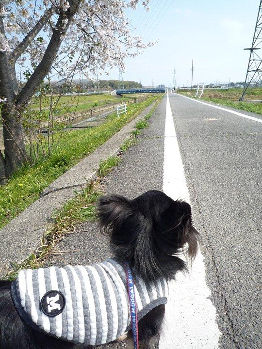 2020年4月11日 春のお散歩  !(^^)!_b0341140_1858158.jpg