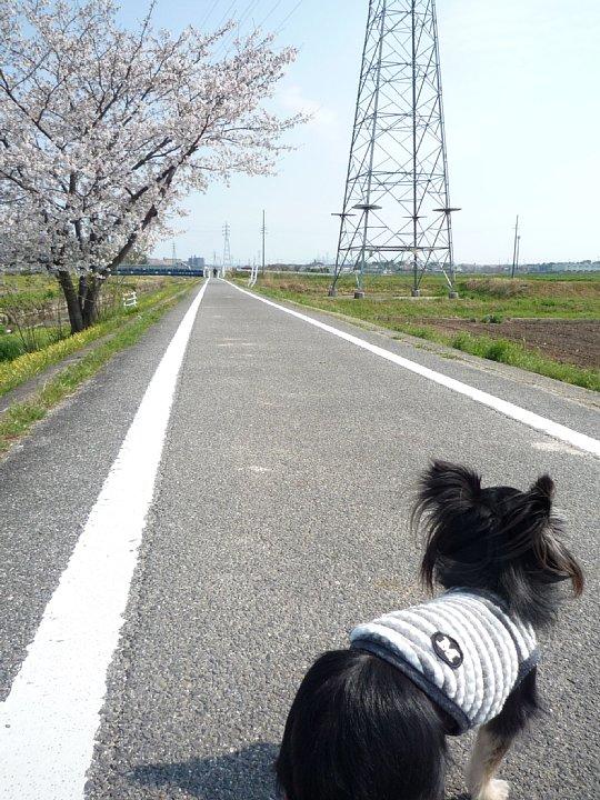 2020年4月11日 春のお散歩  !(^^)!_b0341140_1858486.jpg