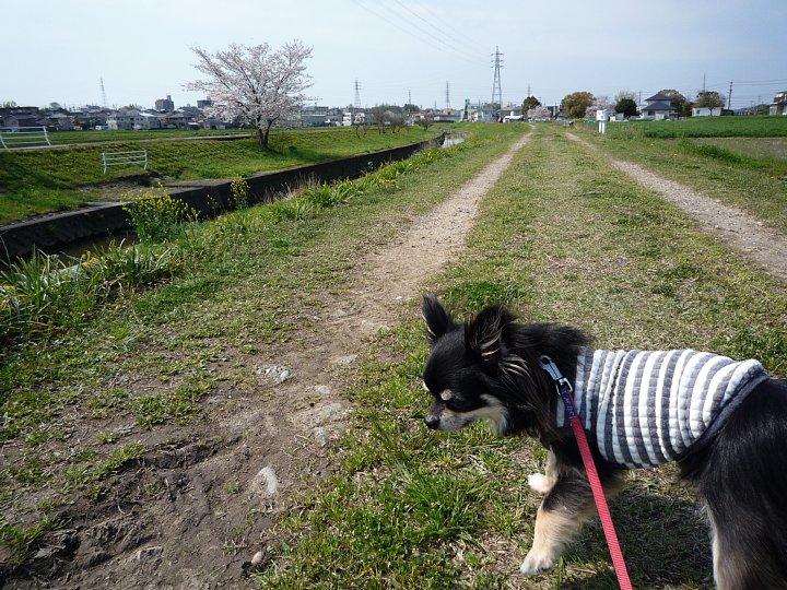 2020年4月11日 春のお散歩  !(^^)!_b0341140_1912073.jpg