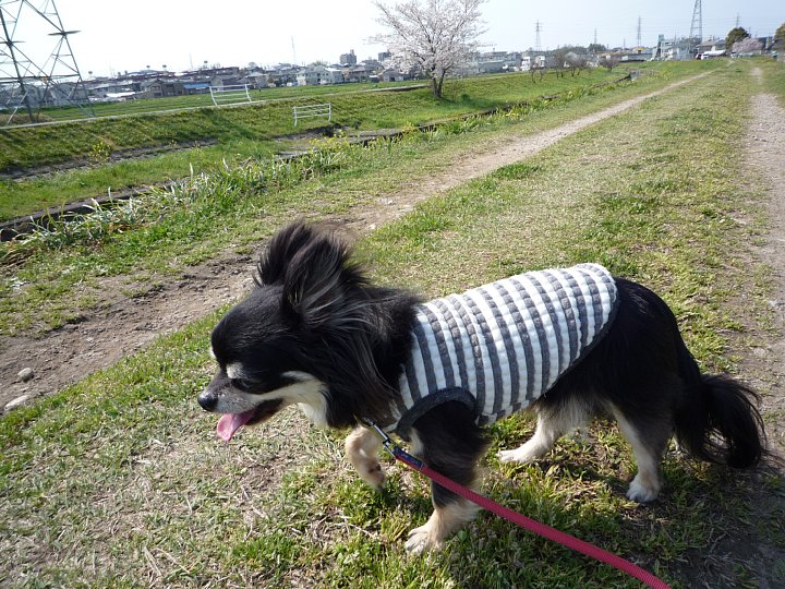2020年4月11日 春のお散歩  !(^^)!_b0341140_191321.jpg