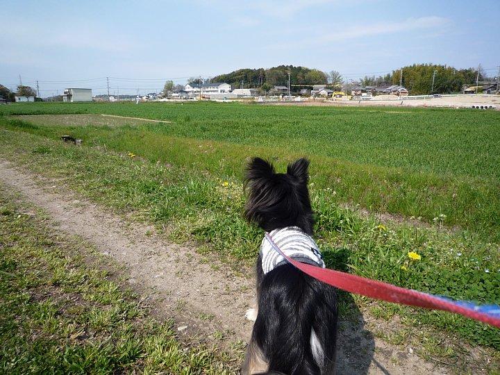 2020年4月11日 春のお散歩  !(^^)!_b0341140_192646.jpg