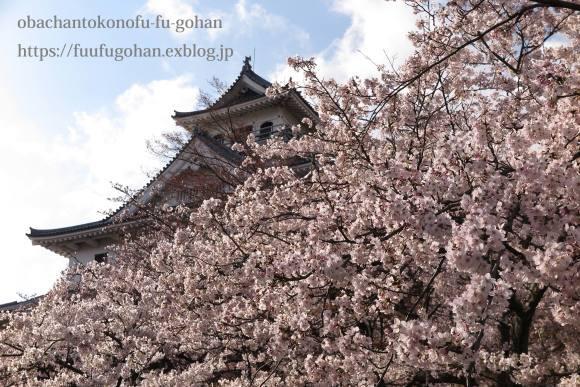 桜は、美しく咲き誇っています&昨夜の鴨鍋御膳_c0326245_10520634.jpg