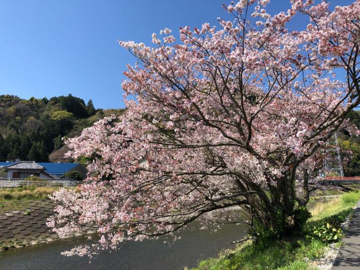 春だけど_d0099845_23071665.jpg
