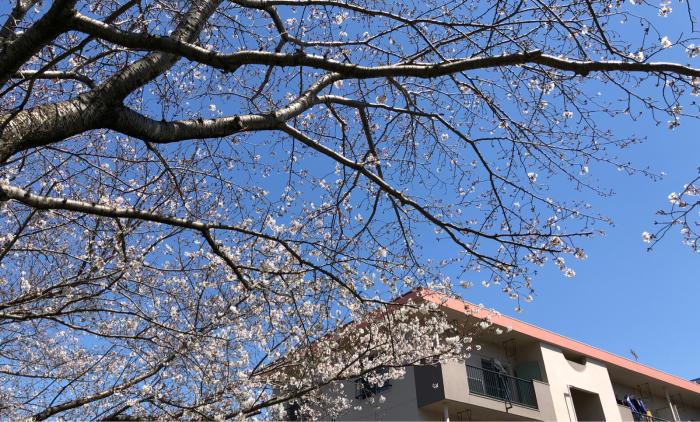 春だけど_d0099845_23104235.jpg