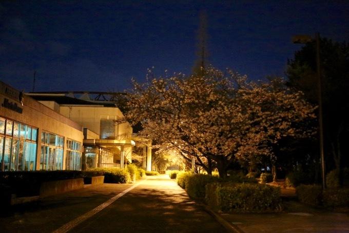 夜桜_c0342646_10025990.jpg