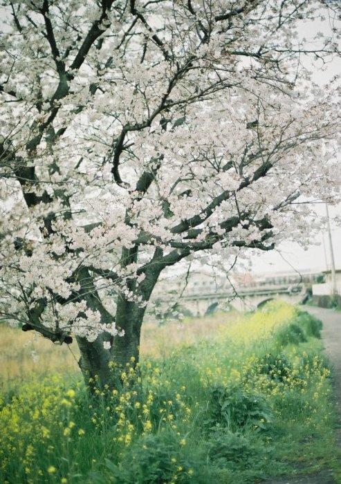 春_f0152749_18264145.jpg